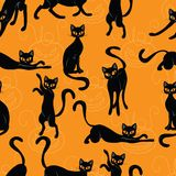 Cat Halloween Image stock