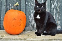 Cat Halloween. Cat came on Halloween. Soon there will be a holiday. The cat has found a suit Stock Images