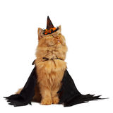 Cat on Halloween. Red cat with a black cape and in a witches hat stock photography