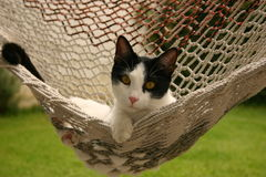 Cat in hammock. Cat in a hammock having fun Royalty Free Stock Photos