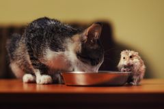 Cat with hamster is going to have dinner Royalty Free Stock Photography