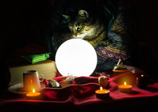 Cat in hand of fortune teller Stock Images