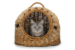 Cat in handbasket Royalty Free Stock Images