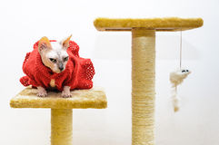 Cat handmade dress mouse toy pet shop stand Royalty Free Stock Images