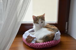 Cat in handmade nest Stock Image