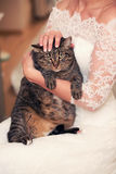 Cat in the hands of bride Stock Photo