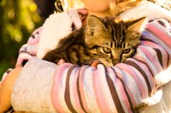 Cat in hands Royalty Free Stock Photography