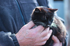 Cat in the hands of a man Royalty Free Stock Photography