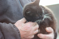 Cat in the hands of a man Royalty Free Stock Photos