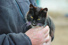 Cat in the hands of a man stock photo