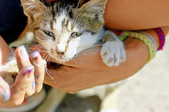 Cat in the hands Stock Photo