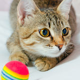 Cat. Handsome young, gray striped cat on a light background royalty free stock image