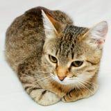 Cat. Stock Images
