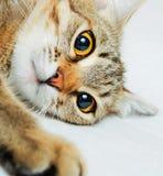 Cat. Stock Photo