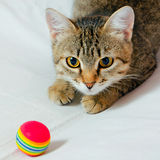 Cat. Handsome young, gray striped cat on a light background stock photos