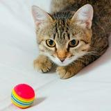 Cat. Stock Photos