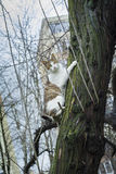 Cat hanging from tree trunk Stock Image