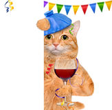 Cat with a hangover and headache is holding a glass of wine, ice bag on a head. Royalty Free Stock Photos
