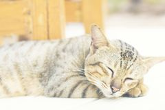 The cat is happy with his eyes closed. Striped cat with relaxing corner royalty free stock photo