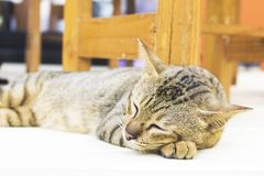 The cat is happy with his eyes closed. Striped cat with relaxing corner royalty free stock photos