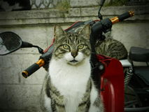 Cat. A happy cat on a motorbike in Istanbul Royalty Free Stock Photos