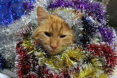 Cat and Happy New Year Stock Photography