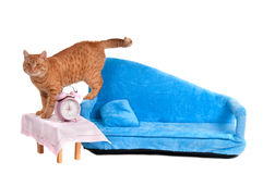 Cat has just woke up Stock Images