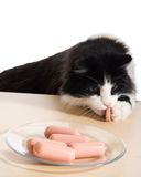 Cat has stolen sausage Royalty Free Stock Images