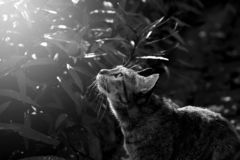 Cat has sunbath in sunny day. Cat has sunbath in sunny day, Cute cat looking up and seeking royalty free stock photo