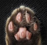 Cat`s paw tattoo 3. The cat has a tattoo on its paw that says ` love you royalty free stock photo