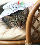 Cat in a hat. Stock Image
