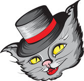 Cat in hat Stock Photo