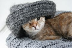Cat with hat. A sweet kittycat whearing a woolen cap Stock Image