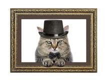 Cat in the hat and bow tie looks out of the picture frame Royalty Free Stock Image