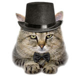 Cat in a hat and a butterfly tie Stock Photos