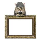 Cat in a hat and a butterfly tie relies on the picture frame stock images