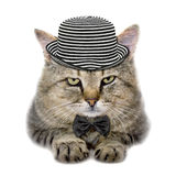 Cat in a hat and a butterfly tie Stock Photography