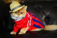 Cat Hat mignonne Photos libres de droits