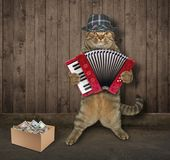 Cat musician near a fence royalty free stock image