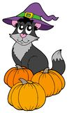 Cat with hat and pumpkins Stock Photography