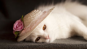 Cat with a hat Royalty Free Stock Images