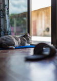 Cat is have motion. Motion of cat in house look lovely stock photos