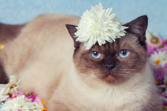 Cat have a rest on the flowers Royalty Free Stock Photo