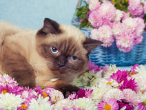 Cat have a rest on the flowers Stock Photo
