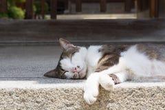 Cat having a nap at street Stock Photos