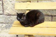 Cat having a rest Stock Photo