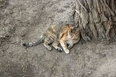 Cat having rest on the ground royalty free stock photo