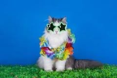 Cat in a Hawaiian shirt Stock Image