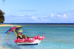 Cat Hawaiian Vacation. A cat wearing Island straw hat and red sunglasses lounging in a wooden boat decorated with hawaiian flower lei and colorful parasol while Stock Photos