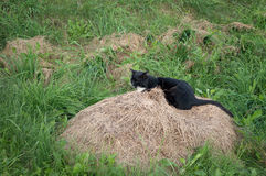 Cat on a hay in a village Royalty Free Stock Images